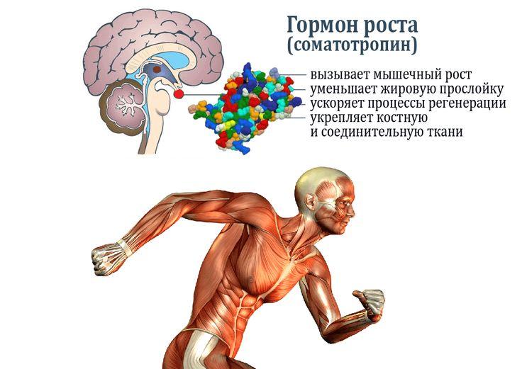 Гормон роста в бодибилдинге: как правильно принимать, побочные эффекты