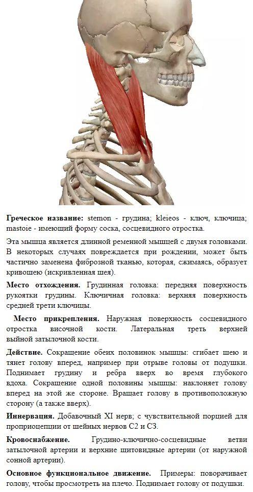 Действенный массаж от головной боли - главные правила самомассажа