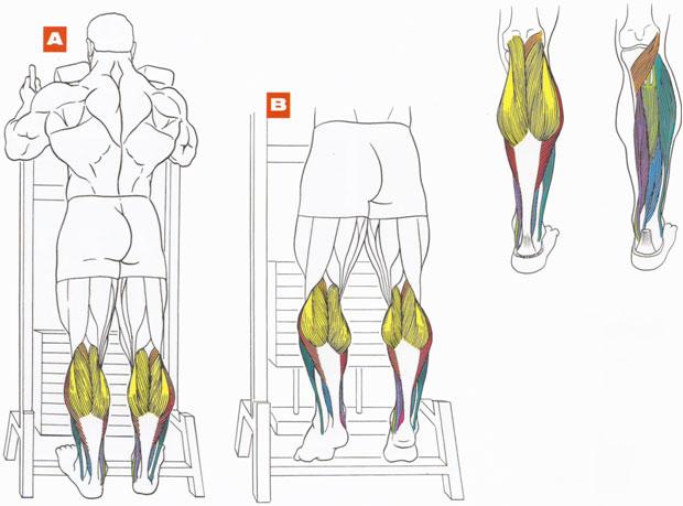 Как накачать икры ног в домашних условиях? упражнения для икроножных мышц