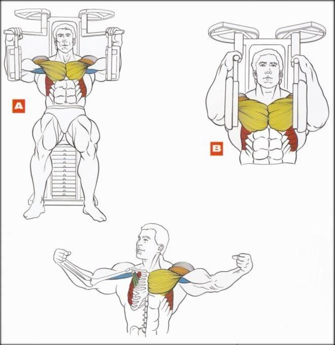 4 отличных упражнения на грудные мышцы в тренажерном зале