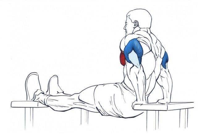 Обратные отжимания от скамьи и пола: тренировка трицепсов