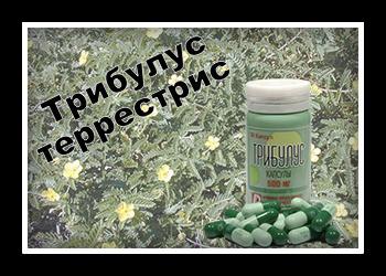 Tribulus terrestris для фертильности мужчин и женщин, как пить трибулус