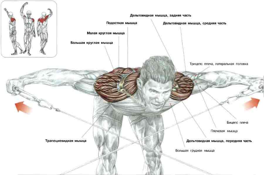 Упражнения для дельтовидных мышц с гантелями | sport-world