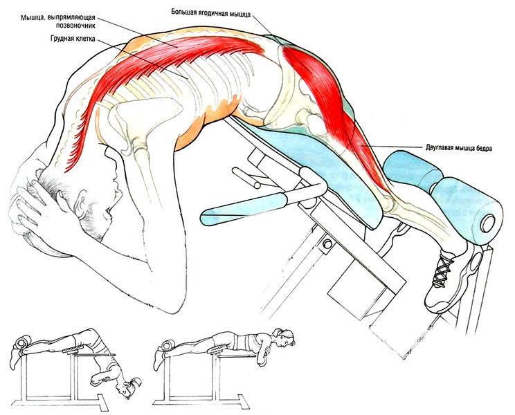 Гиперэкстензия— какие мышцы прорабатывает и как её правильно делать