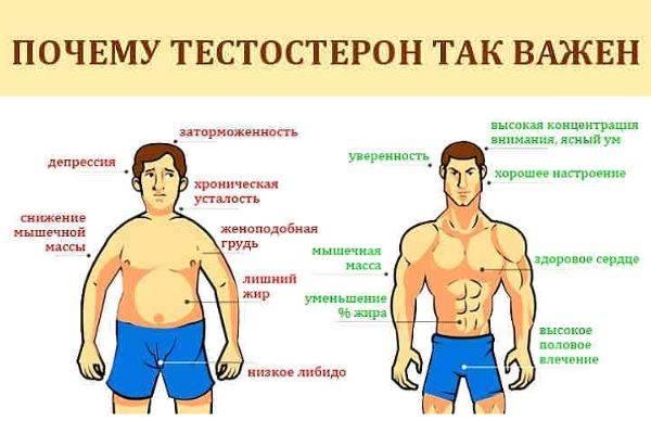 Причины и последствия повышенного уровня тестостерона у мужчин