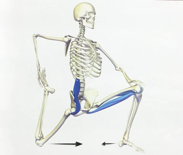 Все о подвздошно-поясничной мышце: упражнения на укрепление и растяжку | позвоночник.org