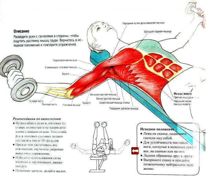 Как накачать грудные мышцы: видео, упражнения, программа тренировок