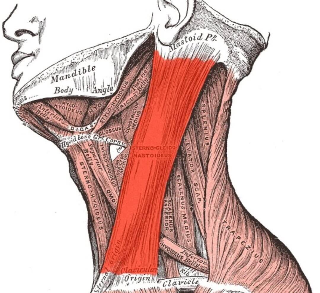 Как накачать шею, упражнения для развития мышц шеи, видео