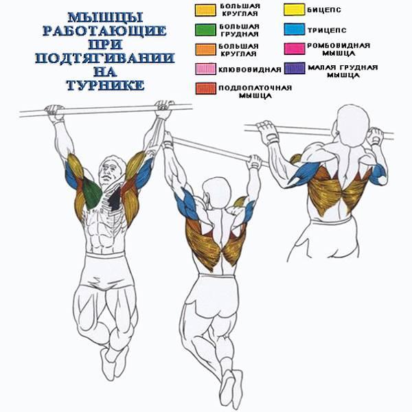 Подтягивания киппингом: техника и правила выполнения упражнения