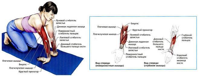 Лечение при растяжении мышц: как долго проходит, как определить, что необходимо делать