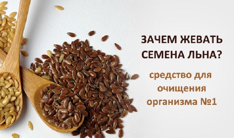 Семена льна: польза, вред и как принимать | польза и вред