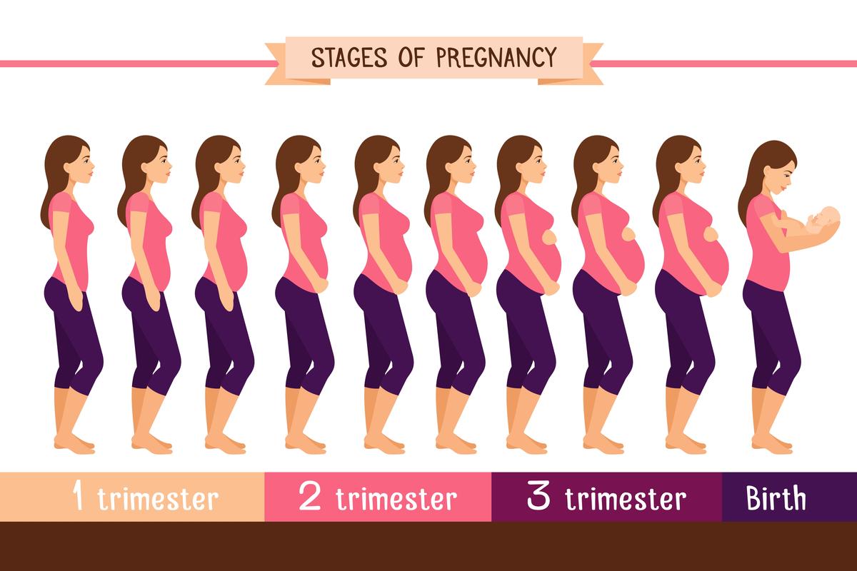 Занятия для беременных: 2 триместр и 3, польза физкультуры дома или в зале, рекомендуемые виды спорта на разных сроках, противопоказания