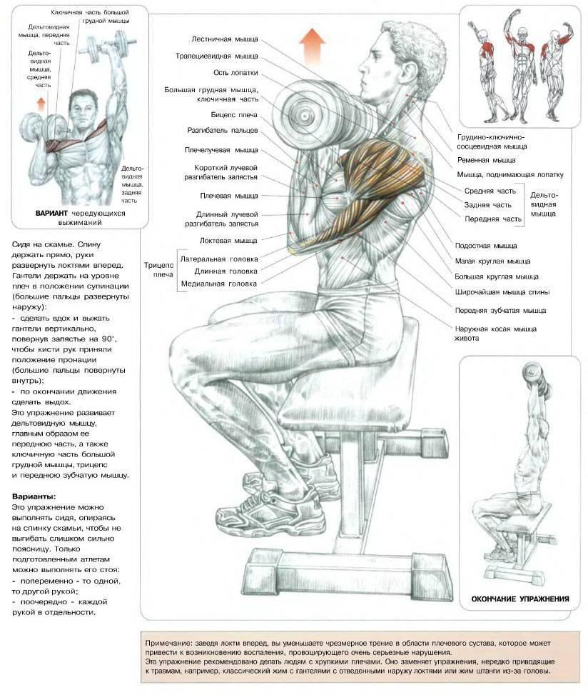 Тренировка спины на ширину и массу — программа упражнений