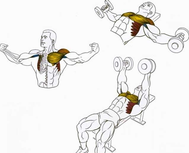 Как накачать крылья: тренировки для зала и в домашних условиях - trainingbody