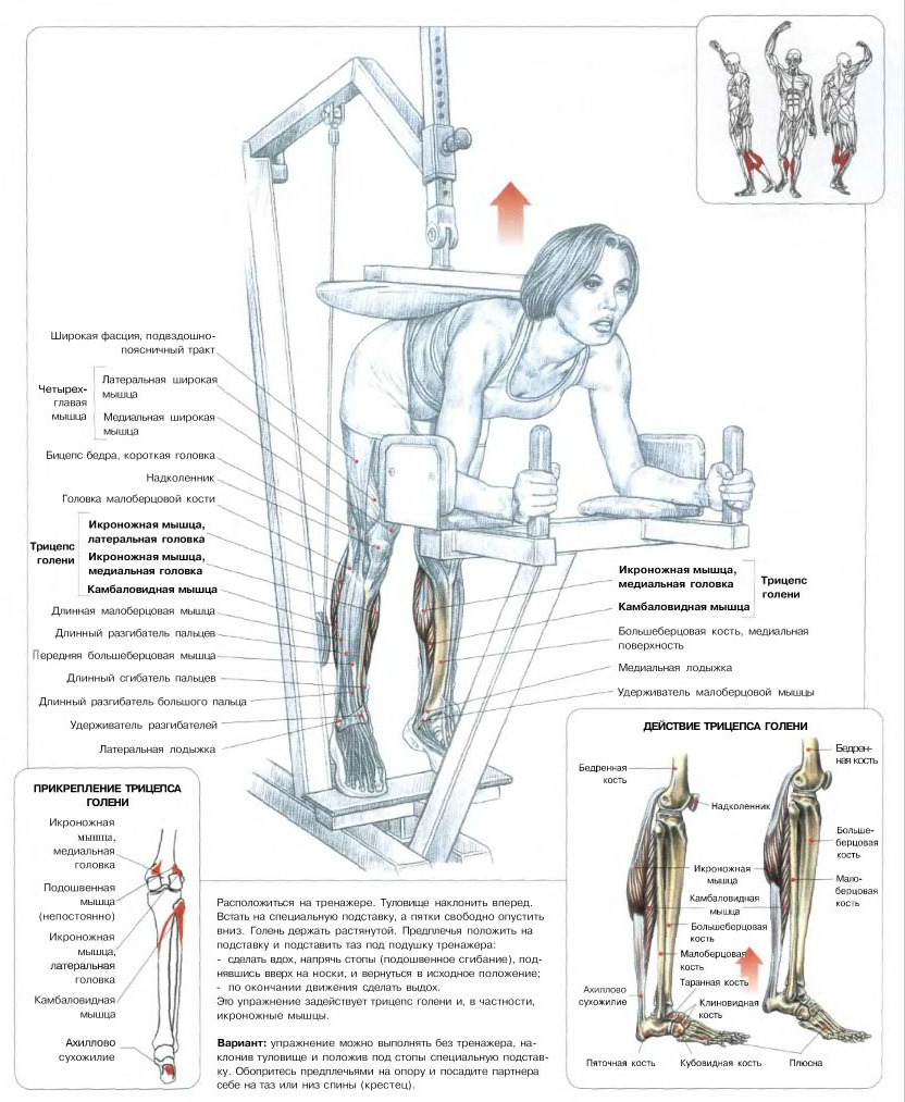 Физические упражнения: виды, классификация, наименования и примеры
