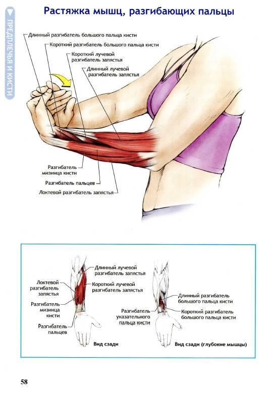 10 лучших упражнений на трицепс: фото и видео | бомба тело