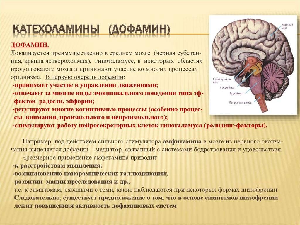 Причины снижения дофамина и методы нормализации его в организме