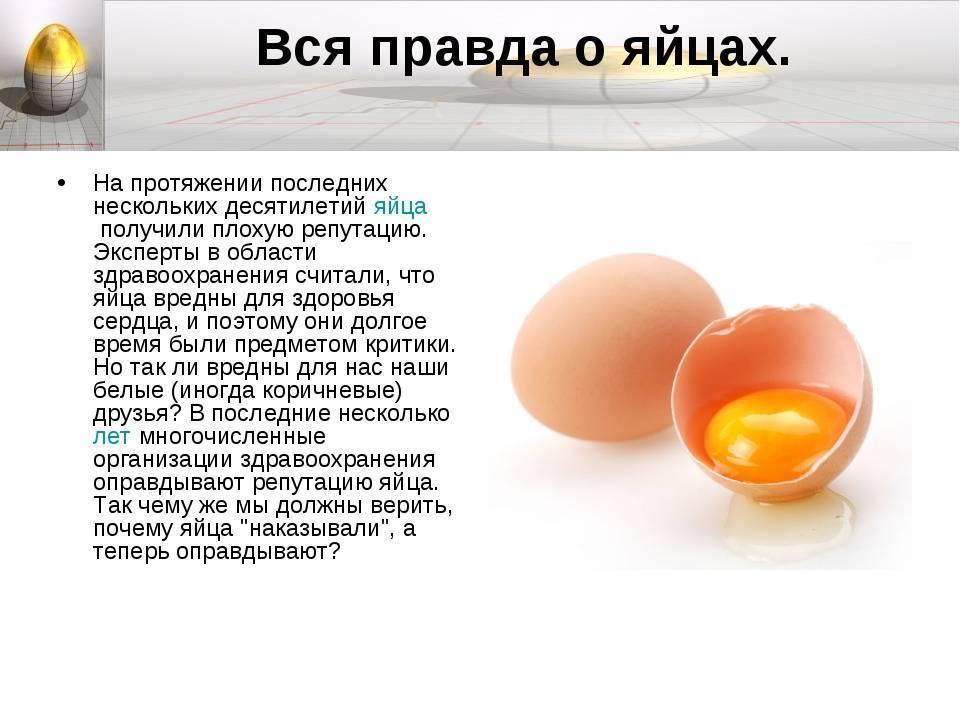 Чем полезны куриные яйца - 15 научных фактов