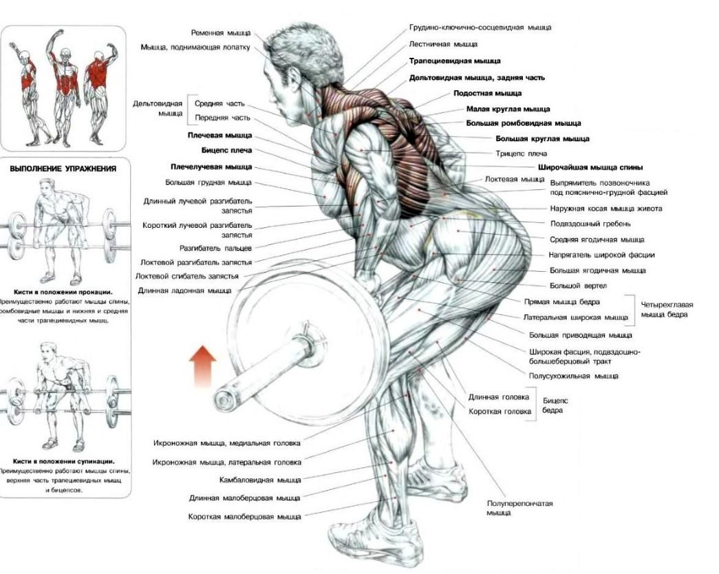 Силовая тренировка на пресс, ноги, спину, ягодицы, плечи, бицепс и трицепс рук, величина нагрузки, упражнения в домашних условиях