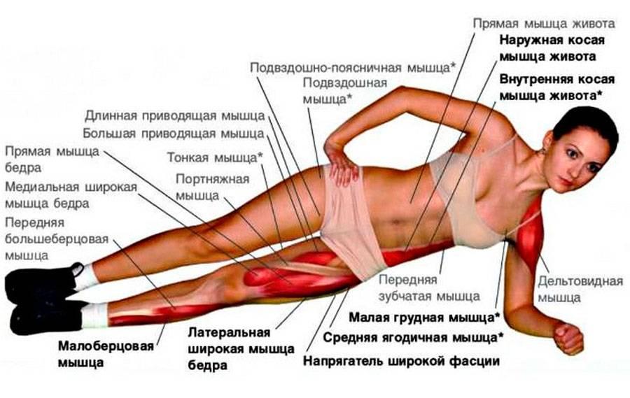 Упражнение ножницы для ног какие мышцы работают при