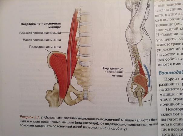 Причины развития, проявления и устранение синдрома подвздошно-поясничной мышцы