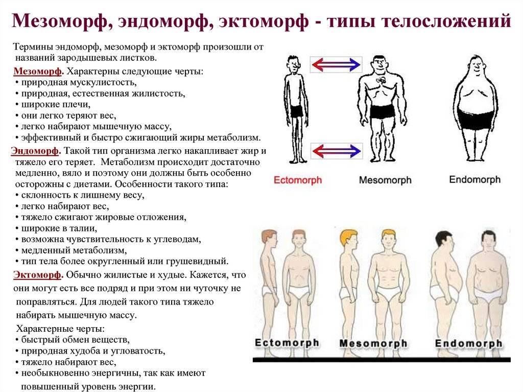 Эктоморф, мезоморф, эндоморф: связь телосложения с психическими особенностями, болезнями и поведением