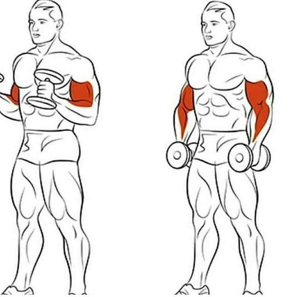 Упражнения для бицепса в домашних условиях