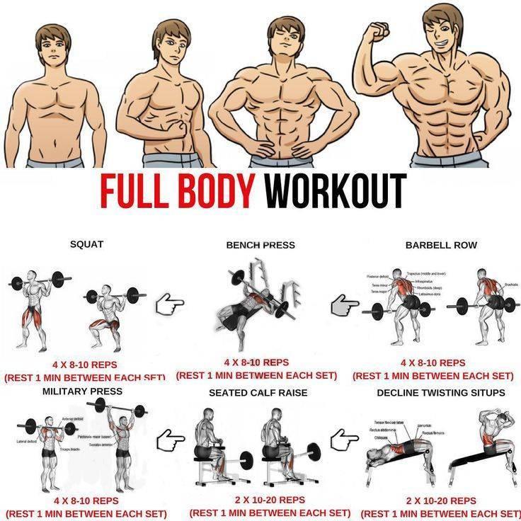 Фулбоди тренировки (full body): прокачка всего тела
