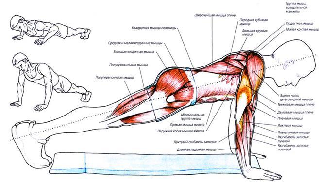 Мышцы стабилизаторы коленного сустава упражнения