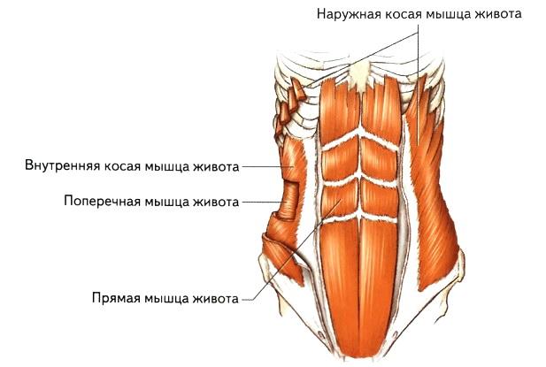 Топ 15 упражнений для трапециевидных мышц: инструкция, схемы, видео программ тренировок
