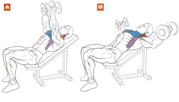 Жим штанги лежа на наклонной скамье под углом 30, 45 градусов: техника, видео, ошибки