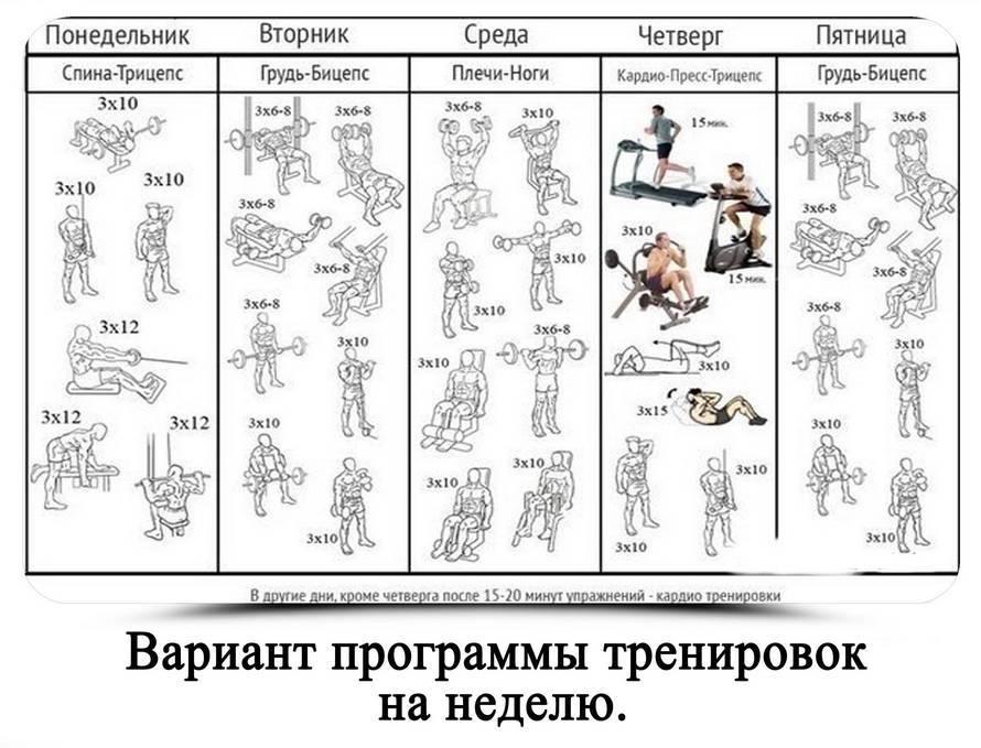 Пирамида в бодибилдинге: суть,виды, особенности, схемы тренировок в домашних условиях | для девушек и мужчин