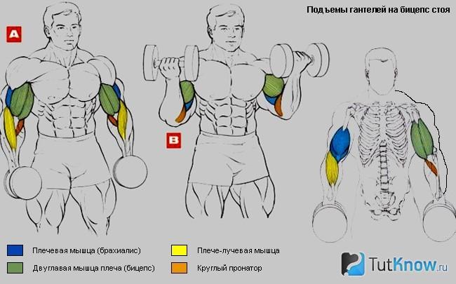 Упражнения для рук без гантелей: как накачать руки дома без железа