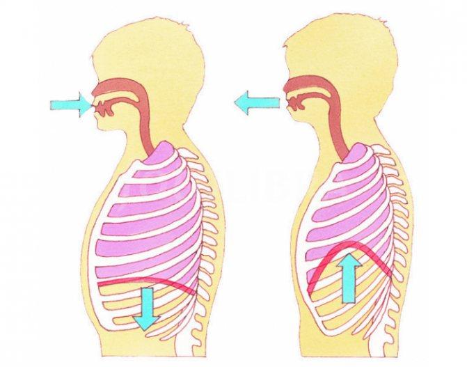 Диафрагмальное дыхание: польза и вред, техника, упражнения, видео