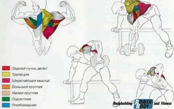 Тяга гантелей в наклоне двумя руками: что дает упражнение