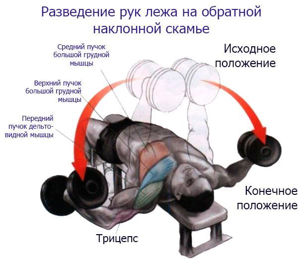 Упражнения со штангой на грудные мышцы: особенности и программы тренировок