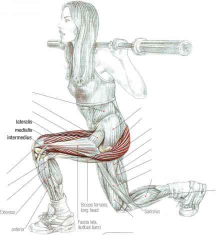 Наклоны со штангой на плечах: техника и варианты упражнения