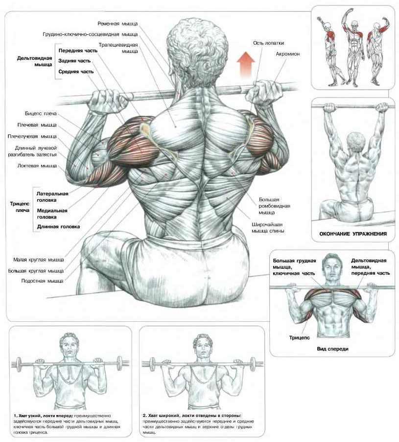Упражнения на переднюю дельту плеча с гантелями