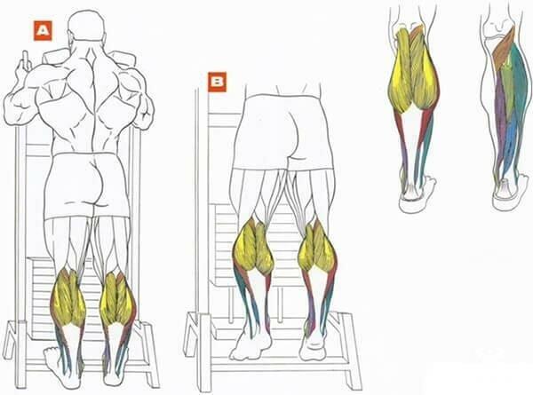 Подъем на носки стоя и сидя для икр: техника с гантелями, со штангой, в тренажере и в смите