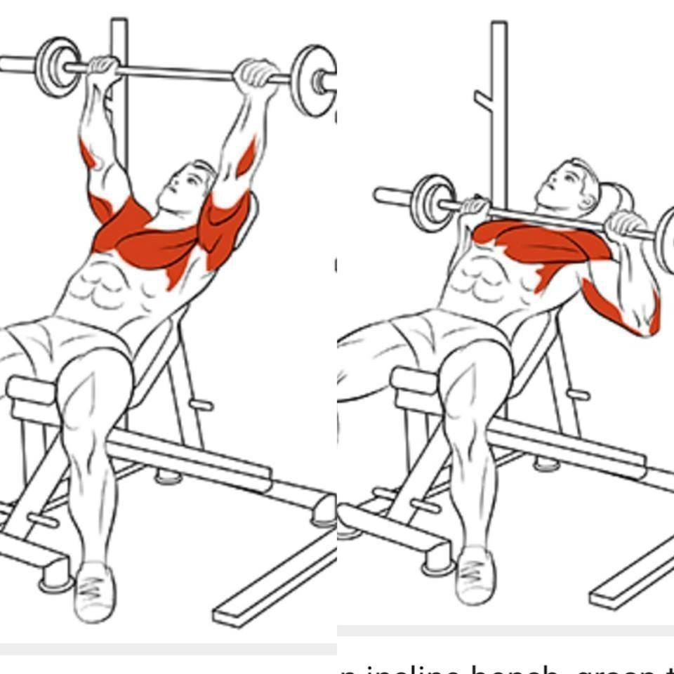 Лучшие упражнения для грудных мышц