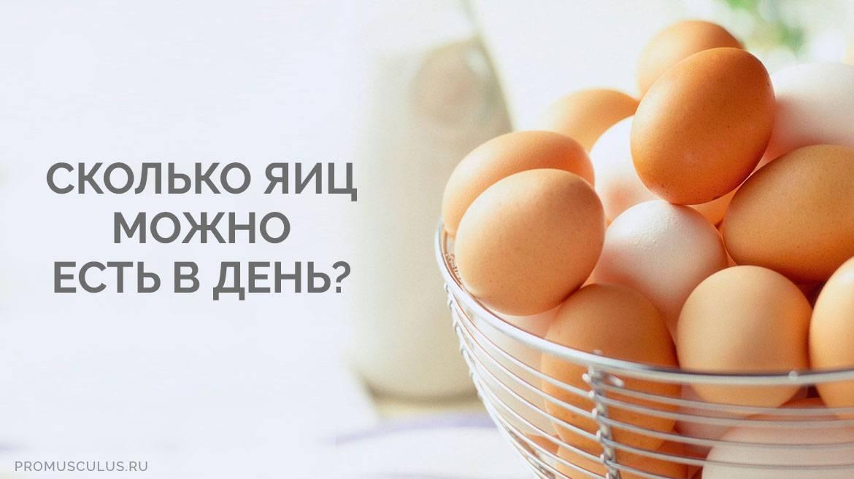 Яйца: стоит ли их включать в рацион