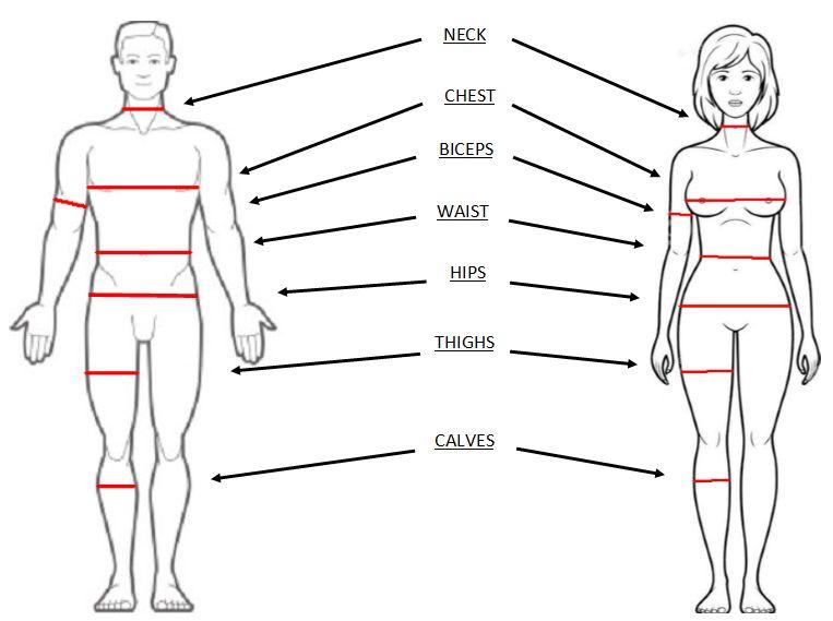 Замеры тела в бодибилдинге. измерение фиругы