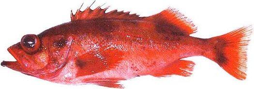 Рыбий жир в бодибилдинге – хороший помощник в борьбе за результат