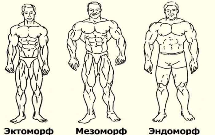 Как питаться и тренироваться в зависимости от типа телосложения?