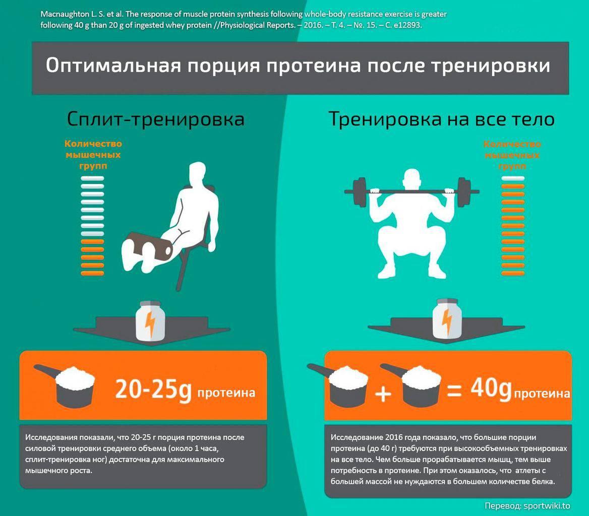 Сколько в день нужно белка: суточная норма, правила подсчета дозировки, количество приемов и влияние белка на организм