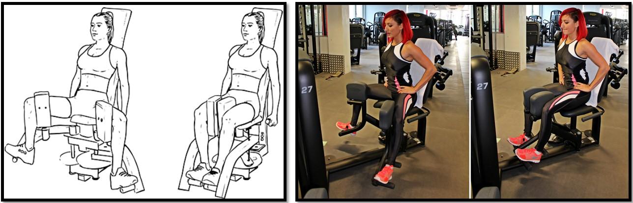 Разведение ног в тренажере — sportfito — сайт о спорте и здоровом образе жизни