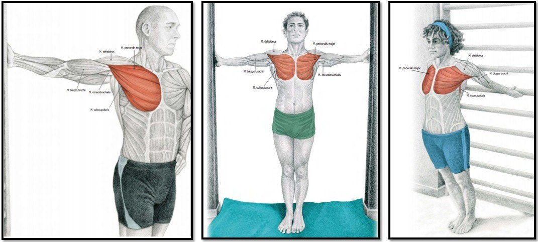 Упражнения на грудные мышцы: обзор лучших и самых эффективных