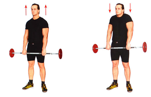 Тяга штанги к поясу в наклоне: техника выполнения, ошибки