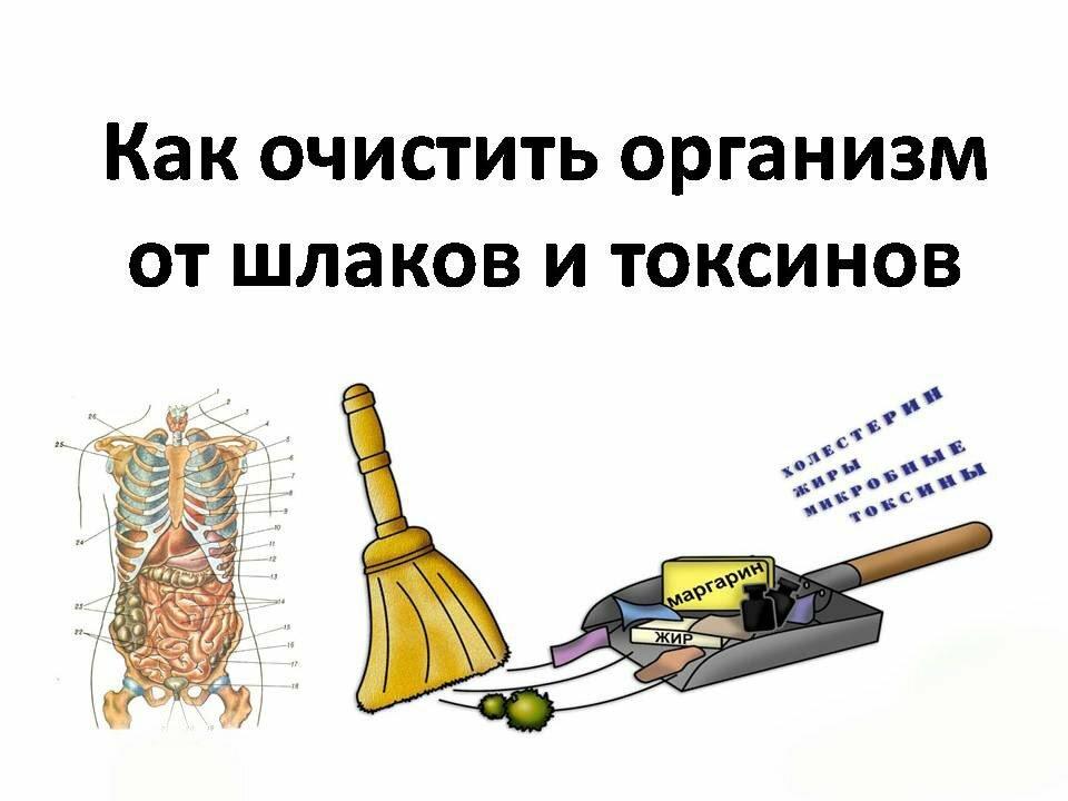 Очищение организма от шлаков и токсинов: как очистить в домашних условиях, последовательность