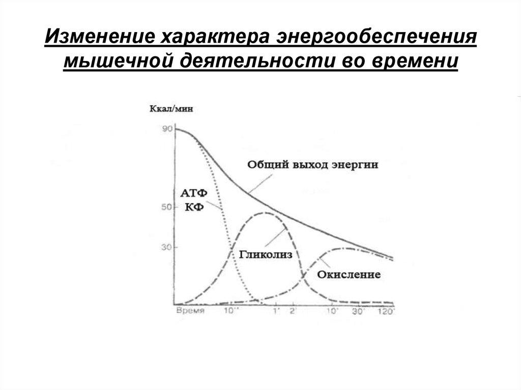 Энергообеспечение организма: способы энергообеспечения